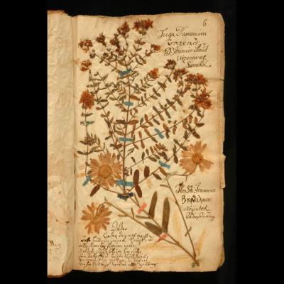 Slovak flowers-in-a-book